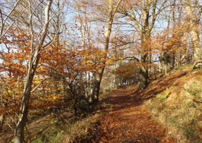 Woodlands Hill
